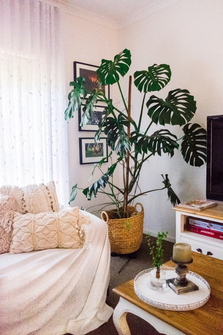 My 5 Best Indoor Plants (Tried andTested)
